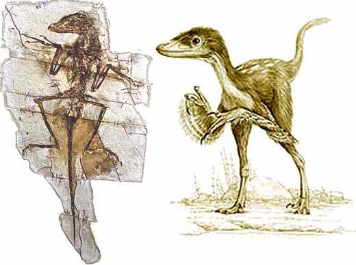 Синорниторзавр