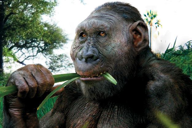 Paranthropus boisei еще не решил, жевать или думать