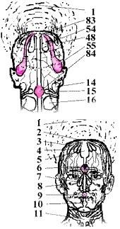 Как нервная система указывает на ОПАСНОСТЬ,  БЕЗЗАЩИТНОСТЬ и ПОТЕРЮ ИНДИВИДУАЛЬНОСТИ?