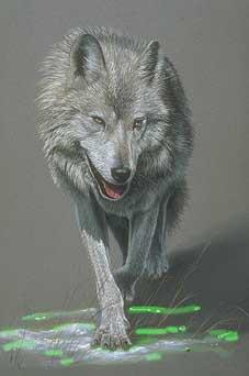 ...Волк выскочил из-за густых зарослей...