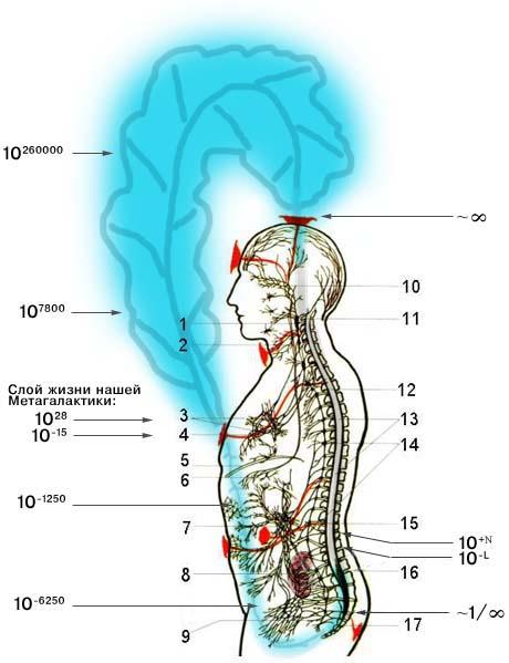Явление тканетворения органа (полноорганности) Бога с использованием Антропокосмоса