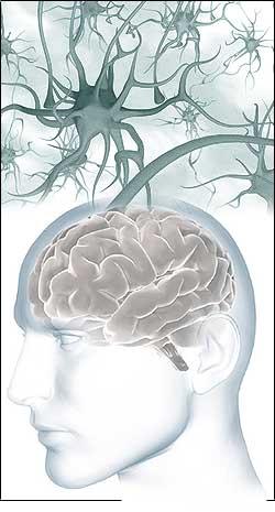 Мозг, ум и разум